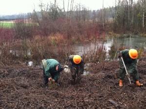 Planting_Valentine Creek