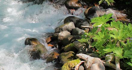 At Pamelia creek
